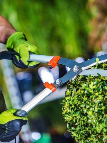 Jardinero Profesional Experto en Diseño, Creación y Mantenimiento de Parques y  Jardines