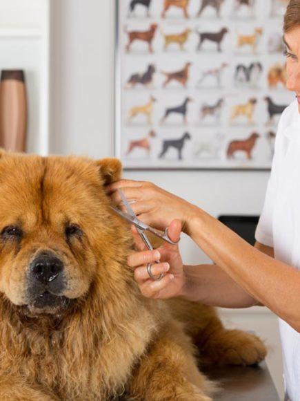 Técnico en Estética, Belleza y Peluquería Canina y Felina