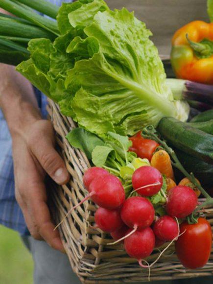 Máster en Agricultura Ecológica