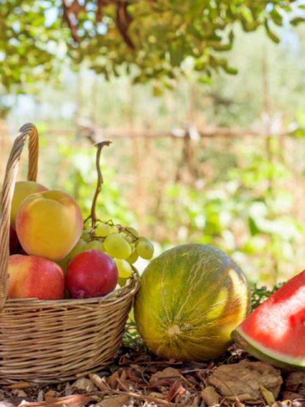Máster en Fruticultura