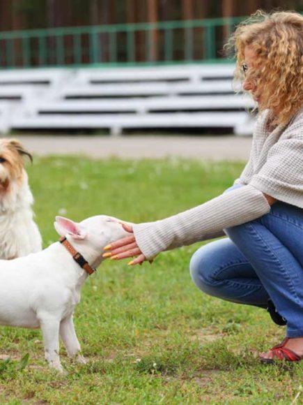 Monitor Especialista en Terapia Asistida con Perros