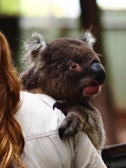 Cuidador de Animales en Parques Zoológicos